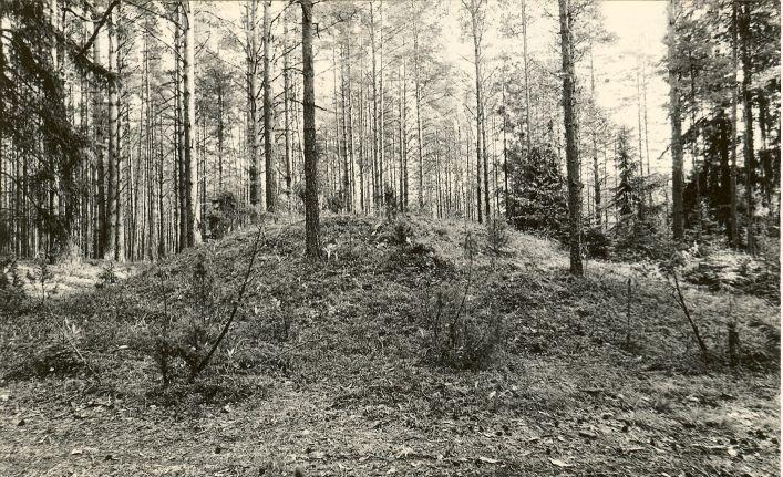 3 kääbast reg nr 11475-11477. Foto: M. Pakler, september 1975.
