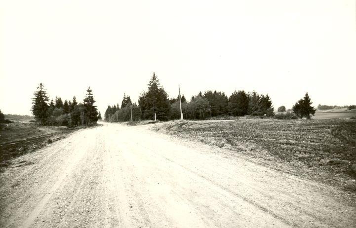 Kivikalmed reg nr 11585-11604. Foto: M. Pakler, september 1979.