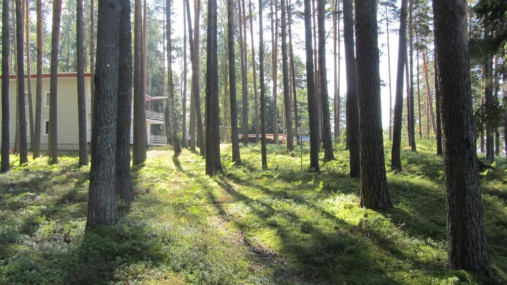 Vaade kivikalmele reg nr 12950 põhjast. Foto: Karin Vimberg, 30.08.2012.