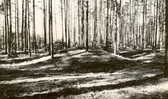 Kääbaskalmistu reg nr 11667-11678, 11983. Foto: M. Pakler (ülejäänud fotod on mälestis nr 11667 juures).
