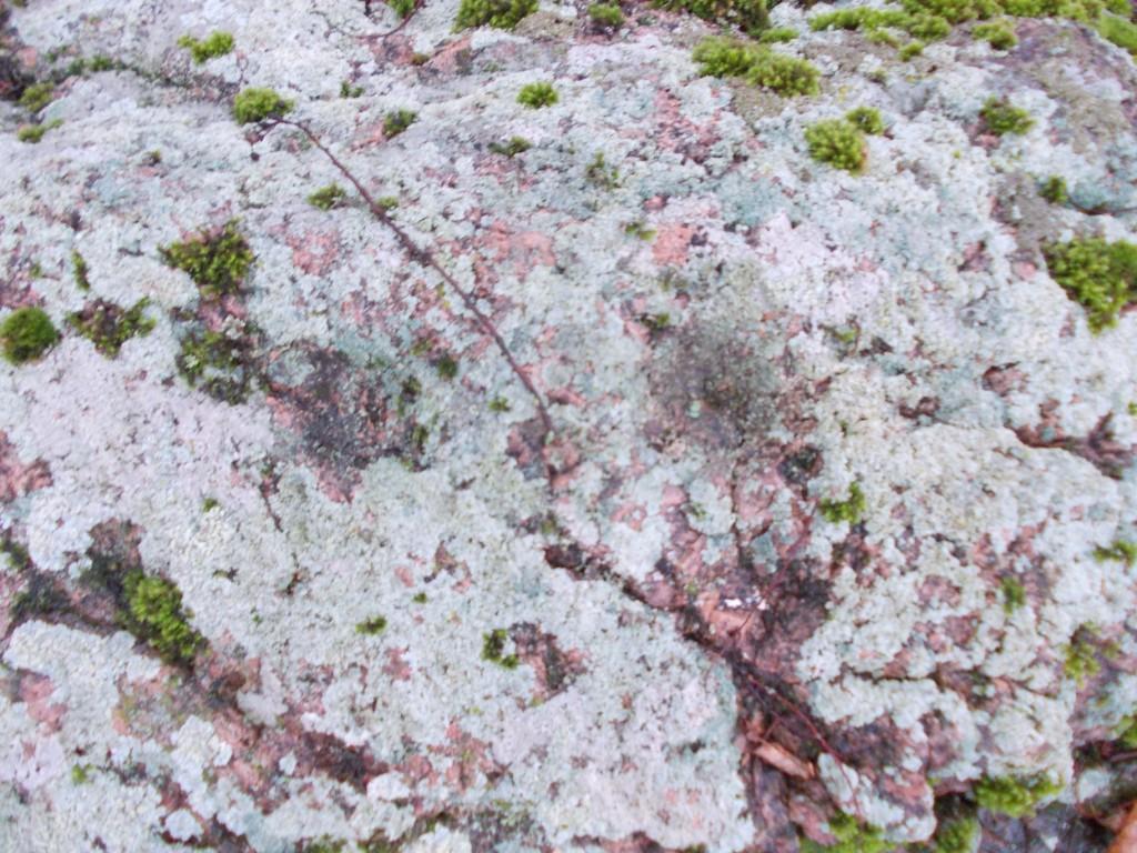 Lohud kivi kõrgeimal nukil. Foto: Ulla Kadakas, 01.09.2012.