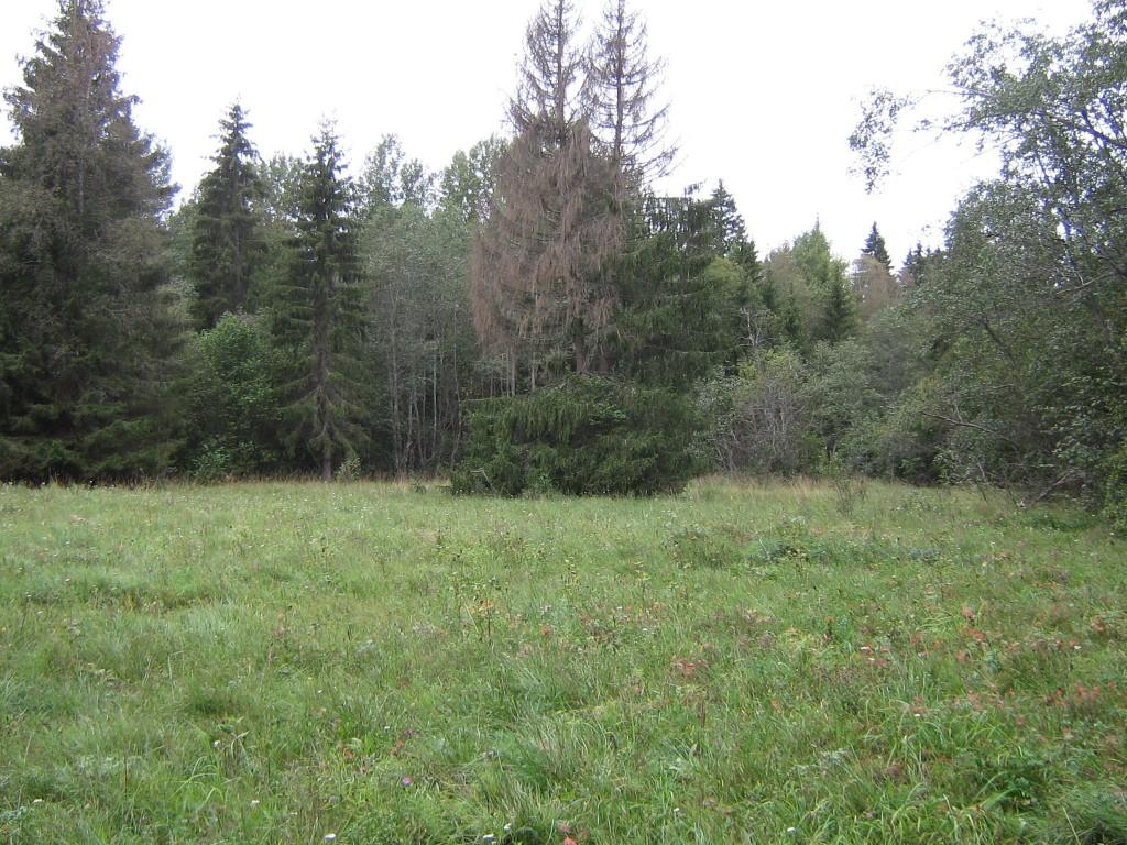 """Muistsed põllud """"Murepesa mägi"""". Foto: Ulla Kadakas, 05.09.2008."""