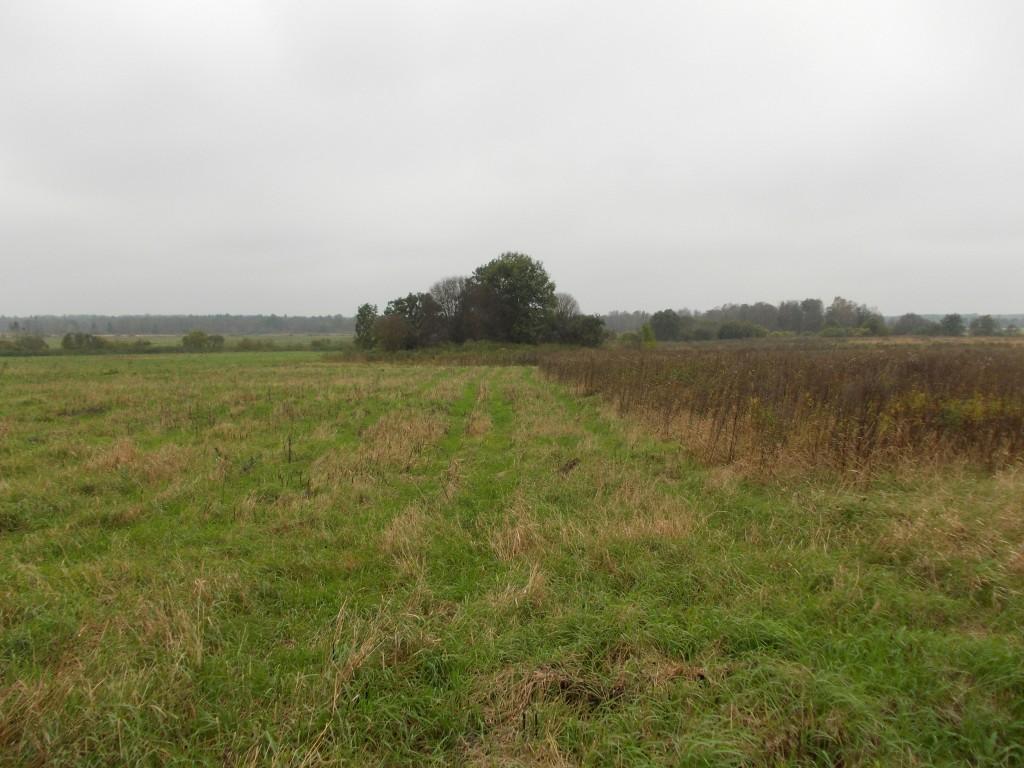 Mälestis asub suures põllukivihunnikus. Foto: Ulla Kadakas, 27.09.2012.