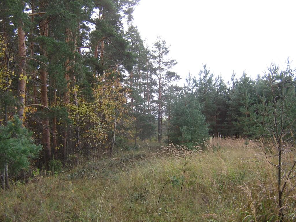 Vaade külakalmistule. Foto: Viktor Lõhmus, 12.10.2012.