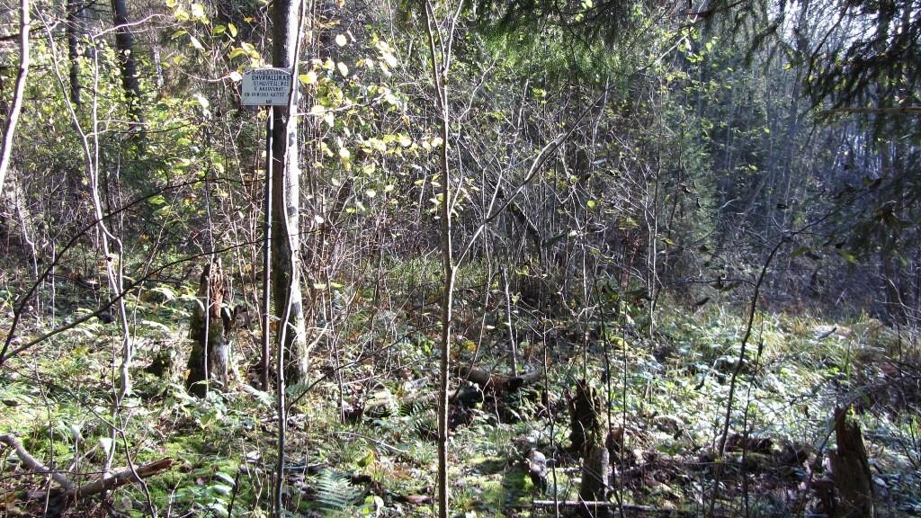 Vaade ohvriallikale reg nr 13671 edelast. Foto: 2012.