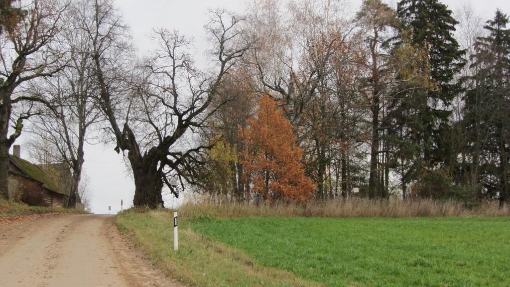 Vaade ohvripärnale reg nr-ga 13046 ja kivikalmele reg nr 13045 edelast. Foto: Karin Vimberg, 24.10.2012.