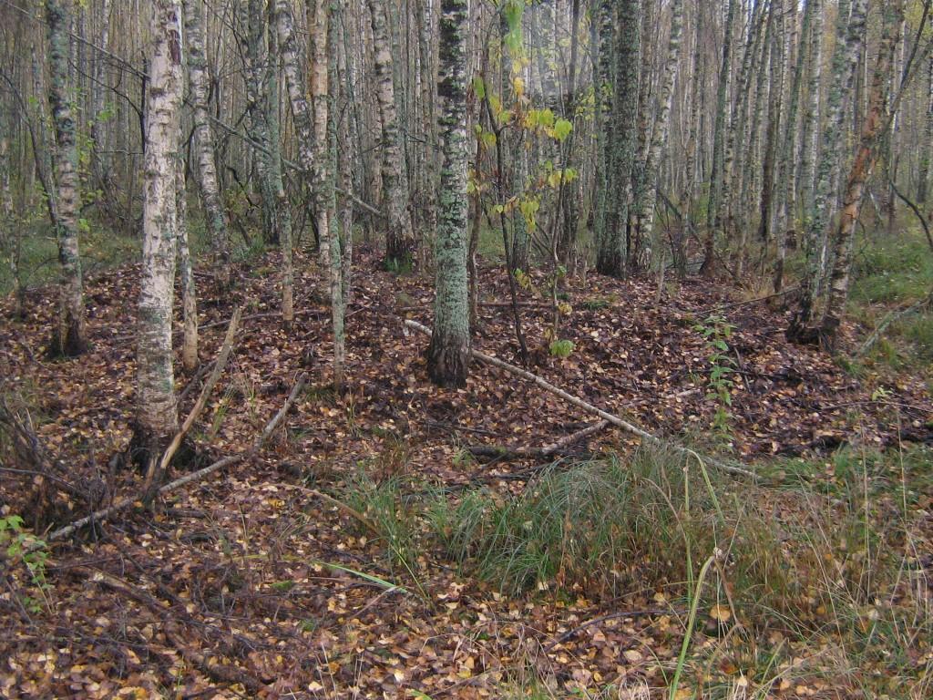 Vaade loodepoolsele kääpale. Foto: Viktor Lõhmus, 17.10.2012.