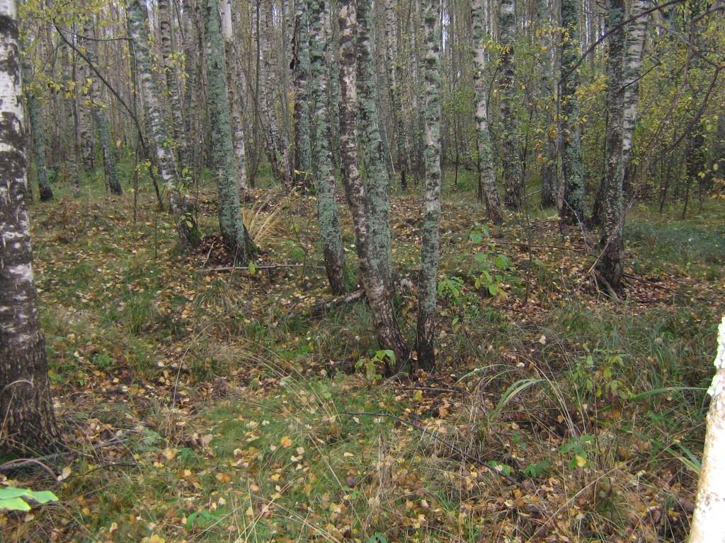 Kääbas asub soisemal alal kasemetsas. Foto: Viktor Lõhmus, 17.10.2012.
