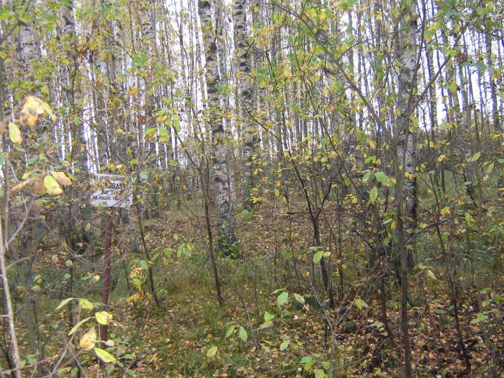 Vaade läbi puude, paistab ka endine plekktähis. Foto: Viktor Lõhmus, 17.10.2012.