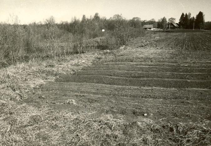 Asulakoht - kagust. Foto: E. Väljal, 15.05.1985.