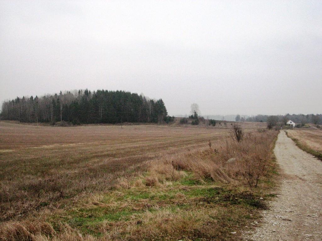 Tõrma Hiiemägi (10356), vaade läänest. Foto: M. Abel, 22.11.2012.