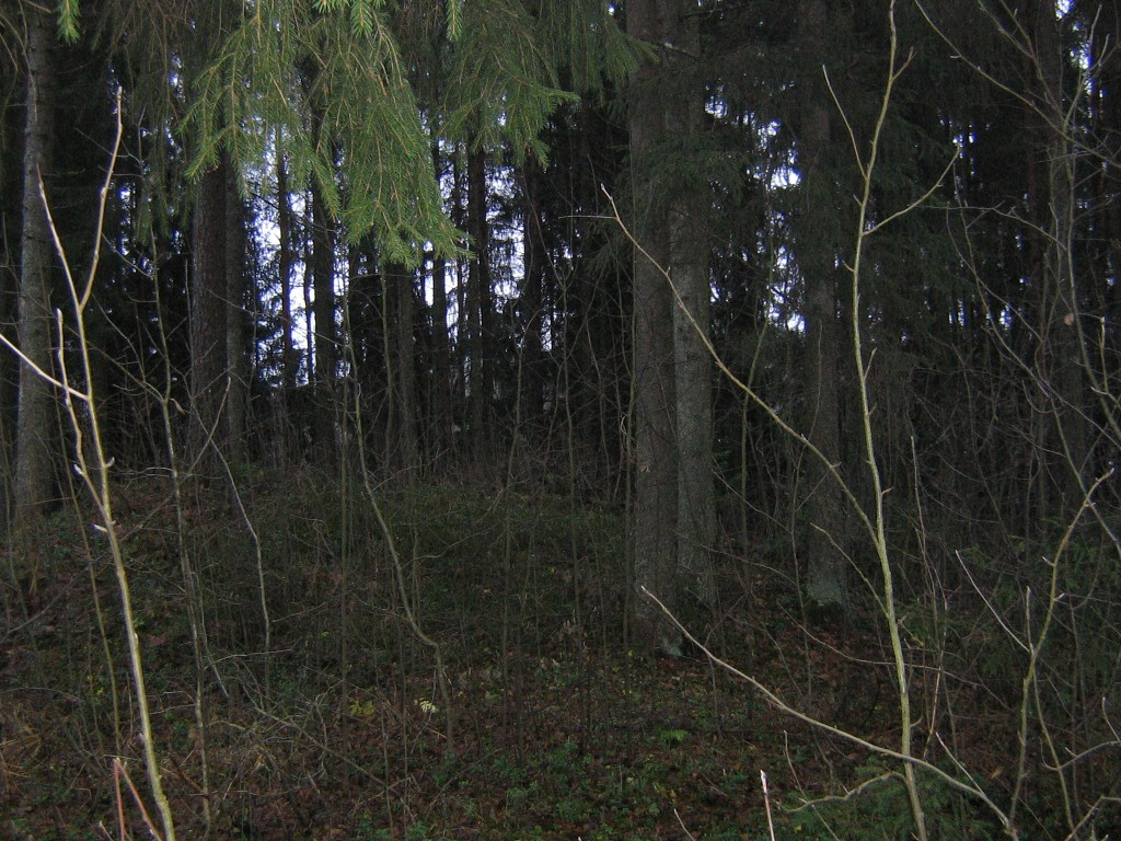 Vaade kääpale sügistaeva väheses valguses. Foto: Viktor Lõhmus, 26.11.2012.