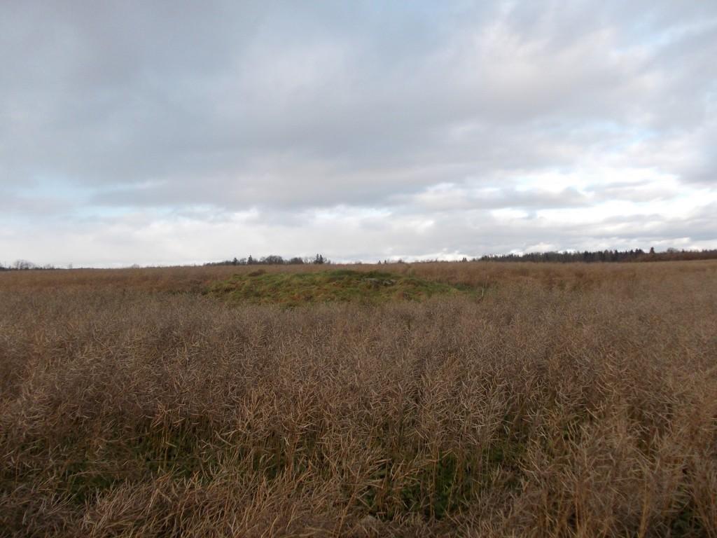 Vaade kivile lõunast. Foto: Ulla Kadakas, 8.11.2012.