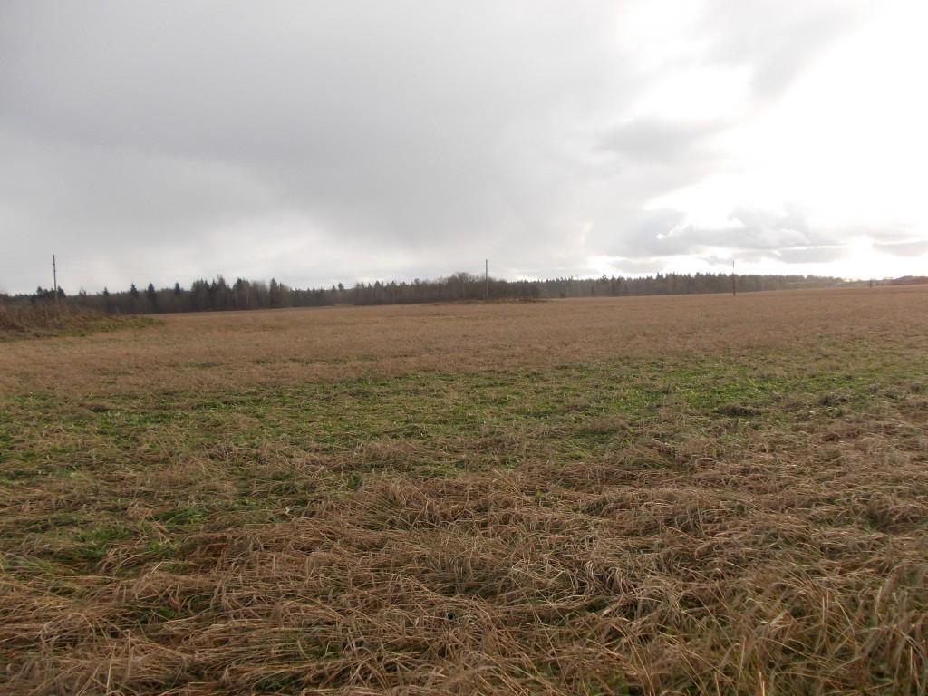 Vaade loodest. Foto: Ulla Kadakas, 8.11.2012.