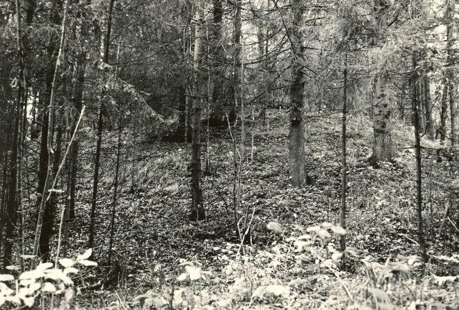 Linnamägi - idast. Foto: E. Väljal, 04.10.1984.