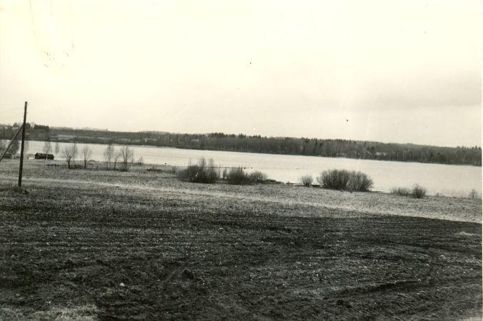 Asulakoht - edelast  Autor A.-M. Rõuk  Kuupäev  29.04.1981