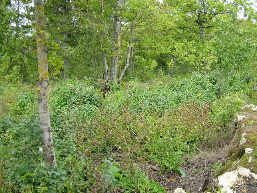 Vaade kalmistule  Autor Kalli Pets  Kuupäev  06.09.2007
