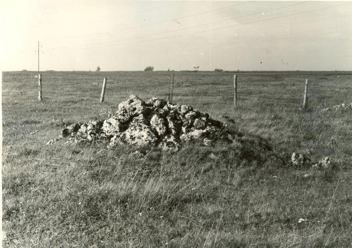 Kivikalme. Foto: A. Sillasoo, 01.10.1974. (E. Heinloo kommentaar - tõenäoliselt mälestise passi järgi III kivikalme, Kivikalme reg-nr 9977)