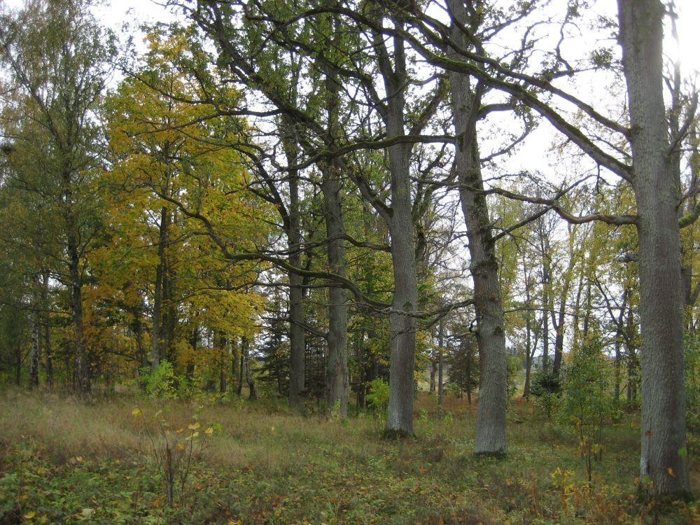 tagapark  Autor R. Pau  Kuupäev  02.10.2007