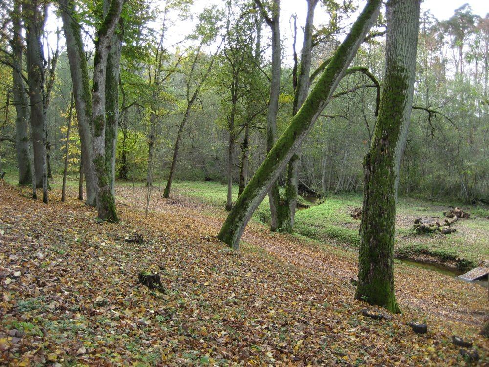 peahoone tagune maastikupark  Autor R. Pau  Kuupäev  02.10.2007