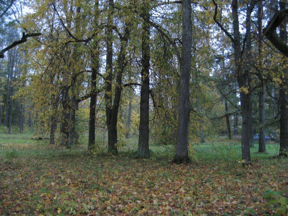 regulaarsed pärnaread  Autor R. Pau  Kuupäev  02.10.2007