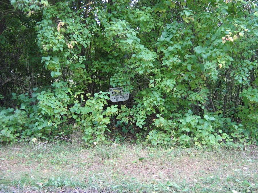 Tähis (idaosas teelõunaservas). Foto: Kalli Pets, 27.09.2007.