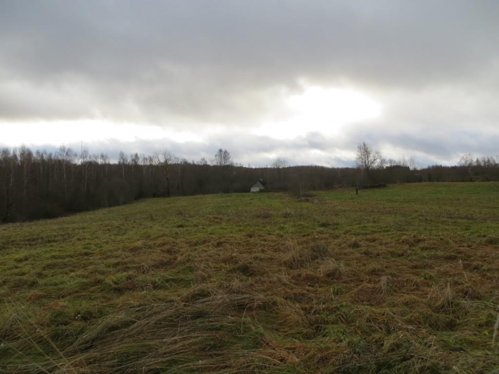 Loosi külakalme A30213, 6.11.2012, Foto: Ingmar Noorlaid