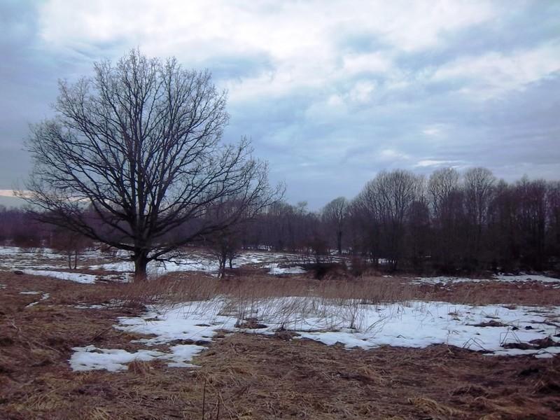 Asulakoht Purila külas, Kose-Purila teest lõunapoolne ala. Vaade Näpsu allika suunas. Foto: K. Klandorf, 16.04.2013.