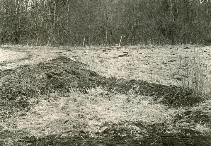 Maa-alune kalmistu - kirdest. Foto: O. Multer, 29.04.1981.