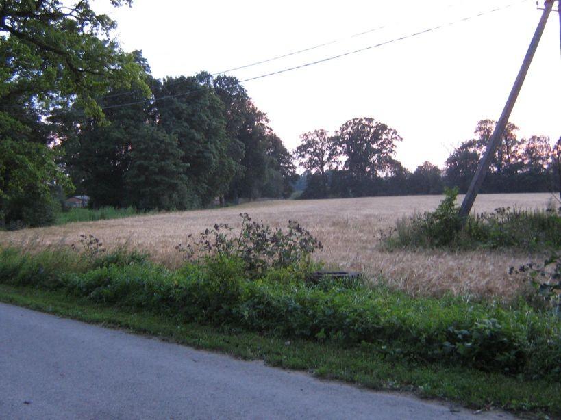 Vaade tee pealt, läände.  Autor Ulla Kadakas  Kuupäev  02.08.2007