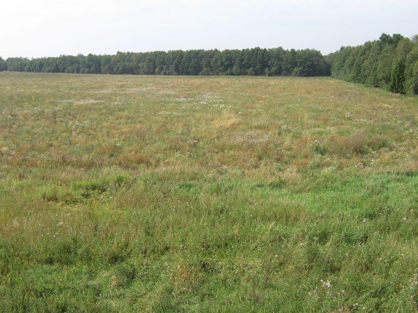 Vaade mälestise poole Tallinn-Tartu maanteelt, idast.  Autor Ulla Kadakas  Kuupäev  14.08.2007