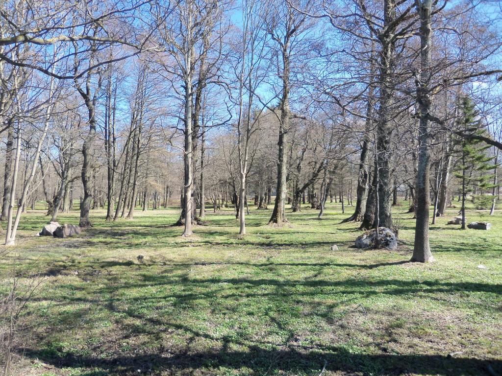 Vaade parki. Foto Silja Konsa 02.05.13.