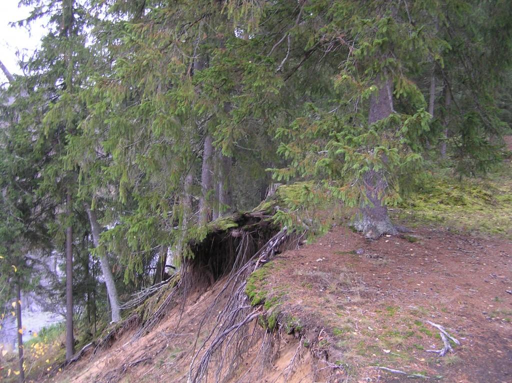 Hävinud kääpa koht Võhandu jõe kaldajärsakul. Foto: Martti Veldi, 26.10.2007.