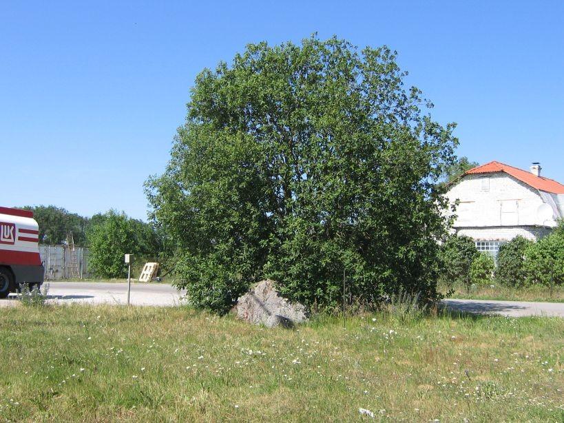Autor Ulla Kadakas  Kuupäev  05.07.2007