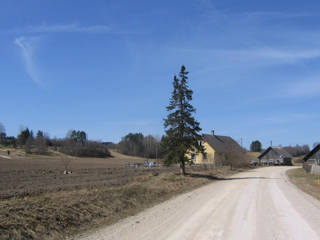 Vaade asulakohale Mügra külas, asulakoha elumaja poolel asuv osa. Foto: Viktor Lõhmus, 02.05.2013.