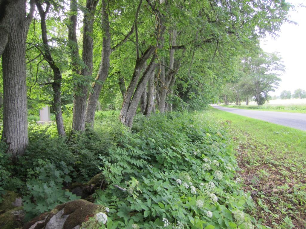 15631 Aaspere mõisa pargi piirdemüürid , vaade. foto: Anne Kaldam 08.07.2013