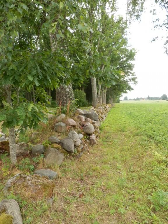 Vaade Halliste kalmistu läänepoolsele piirdemüürile Foto Anne Kivi 30.07.2013