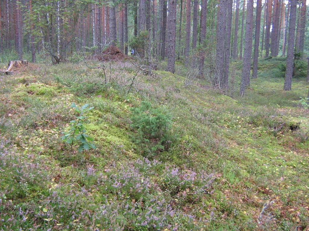 Vaade kääpale metsast suunaga tee poole. Foto: Viktor Lõhmus, 22.08.2013.