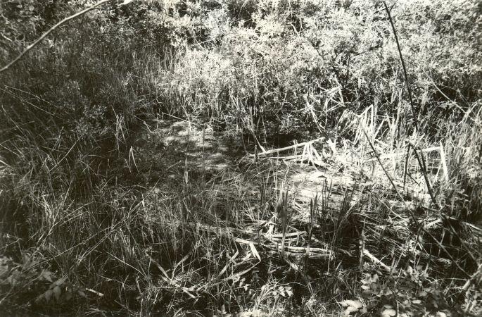 Ohvriallikas - kagust. Foto: E. Väljal, 03.06.1991.