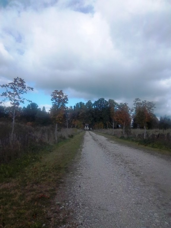 Konuvere mõisa taastatud tee ning hobukastani allee. K. Klandorf 25.09.2013.