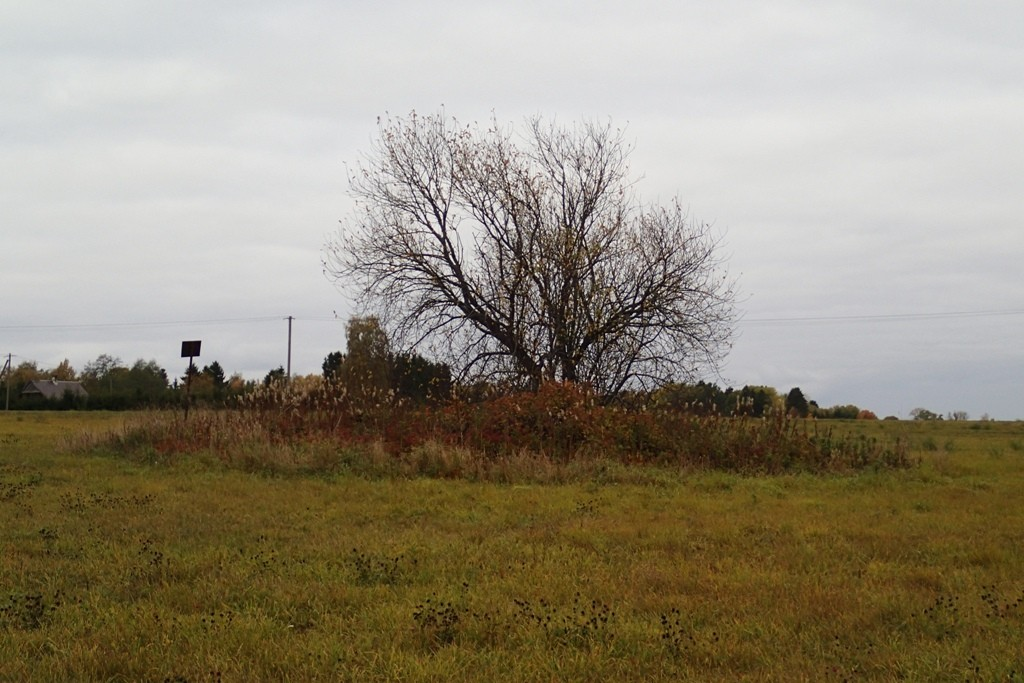 Kivikalme, reg nr 10563. Vaade põhjast. Foto: M. Abel, 04.10.2013.