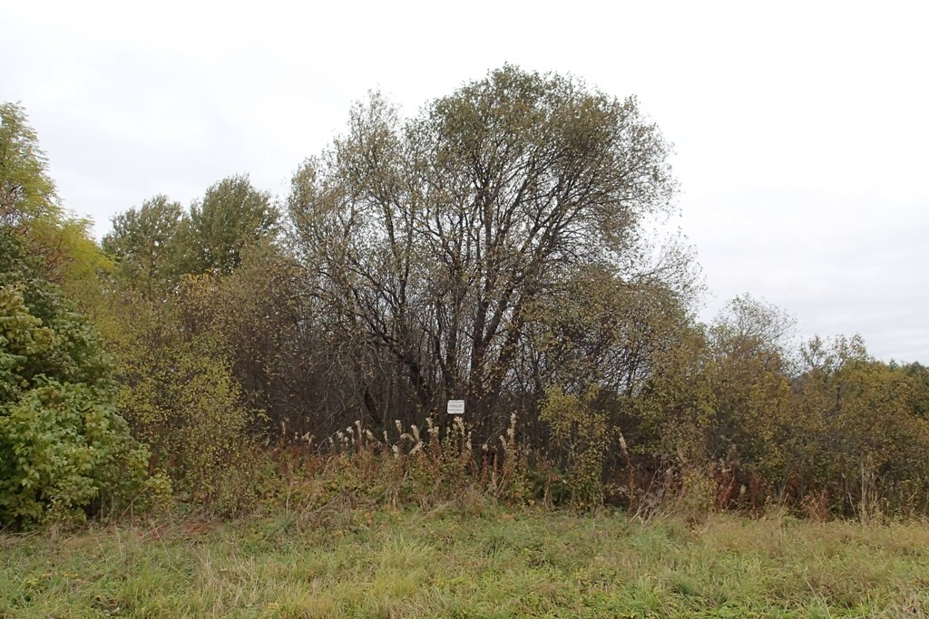 Kivikalme, reg nr 10564. Vaade lõunast. Foto: M. Abel, 04.10.2013.