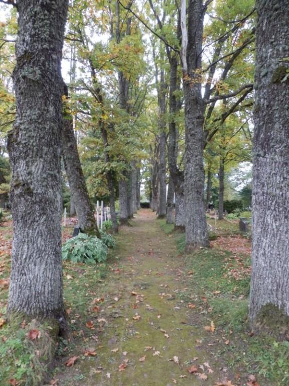 Kolga-Jaani kalmistu allee Foto Anne Kivi 20.09.2013