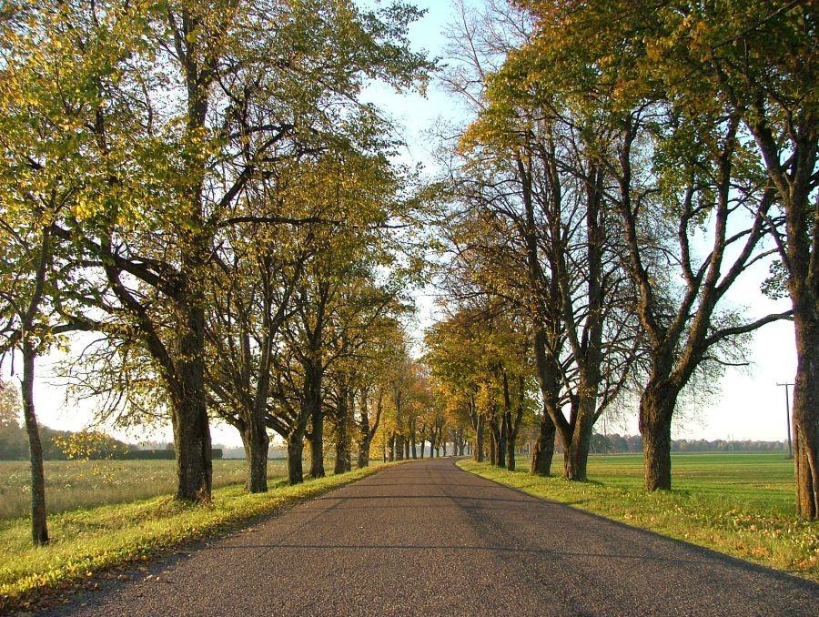Olustvere mõisa alleed Autor J. Vali  Kuupäev  12.10.2005