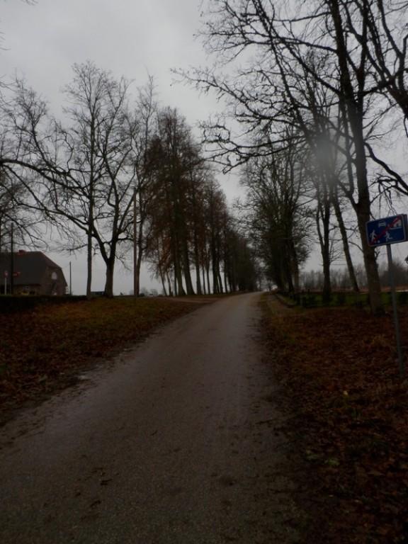 14652 Lahmuse mõisa allee, 19.saj. Foto Anne Kivi 05.11.2013