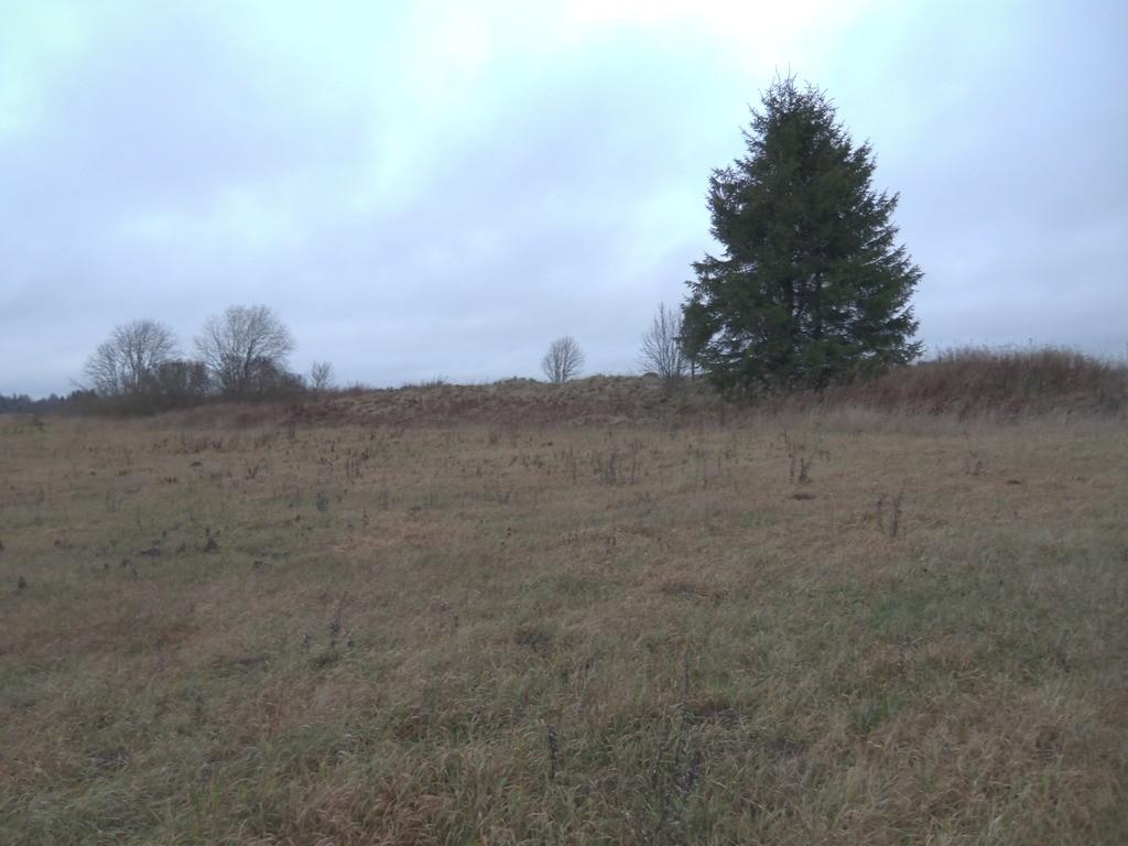 """Kalmistu """"Kabeliküngas"""", reg nr 10303. Vaade lõunast. Foto: M. Abel, 14.11.2013."""