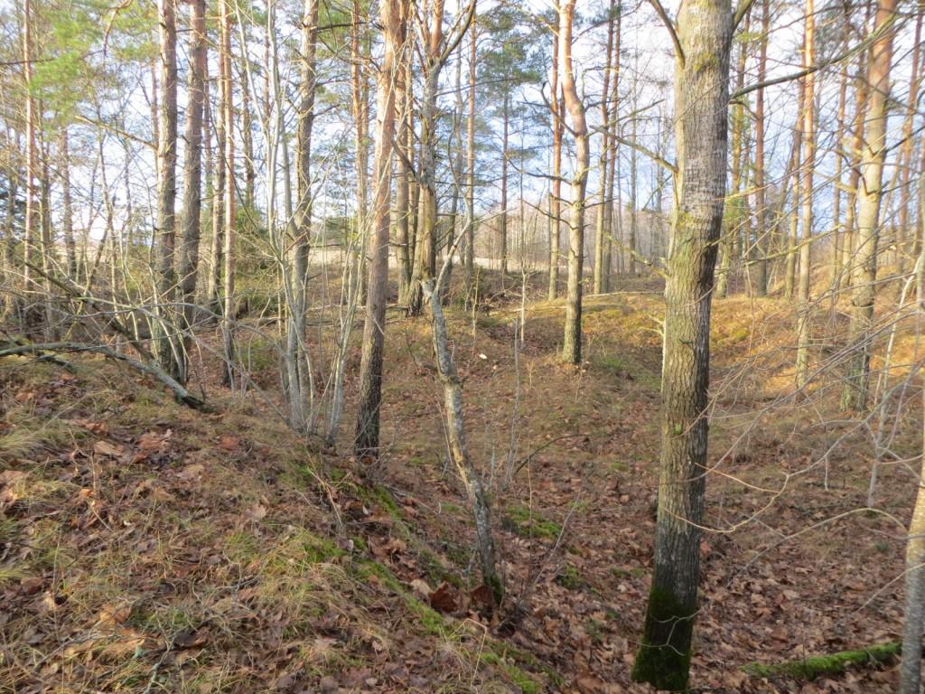 """Kalmistu """"Vasila kabelimägi"""" reg nr 13138. Foto: Ingmar Noorlaid, 28.11.2013"""
