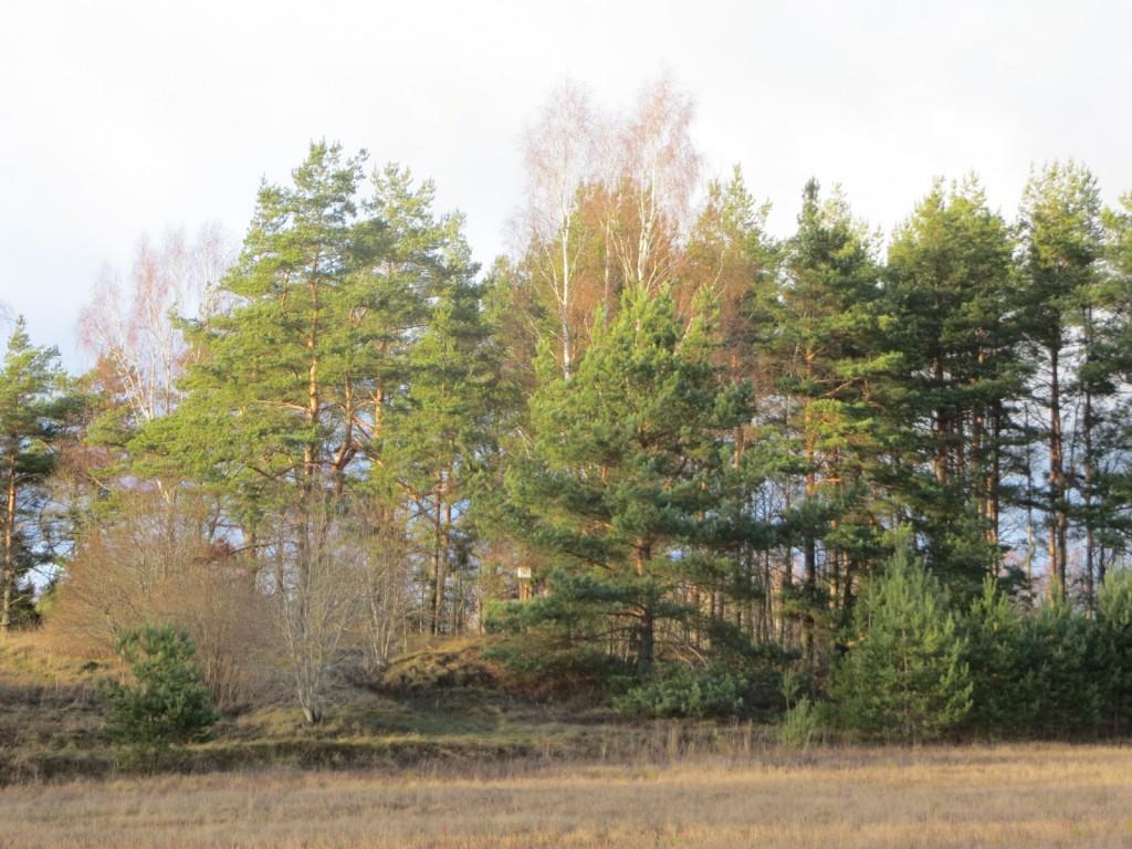 """Kalmistu """"Vasila kabelimägi"""" reg nr 13138. Foto: Ingmar Noorlaid 28.11.2013."""