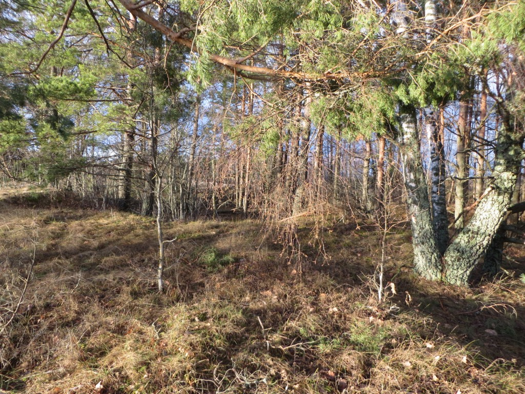 """Kalmistu """"Vasila kabelimägi"""" reg nr 13138. Foto: Ingmar Noorlaid, 28.11.2013."""