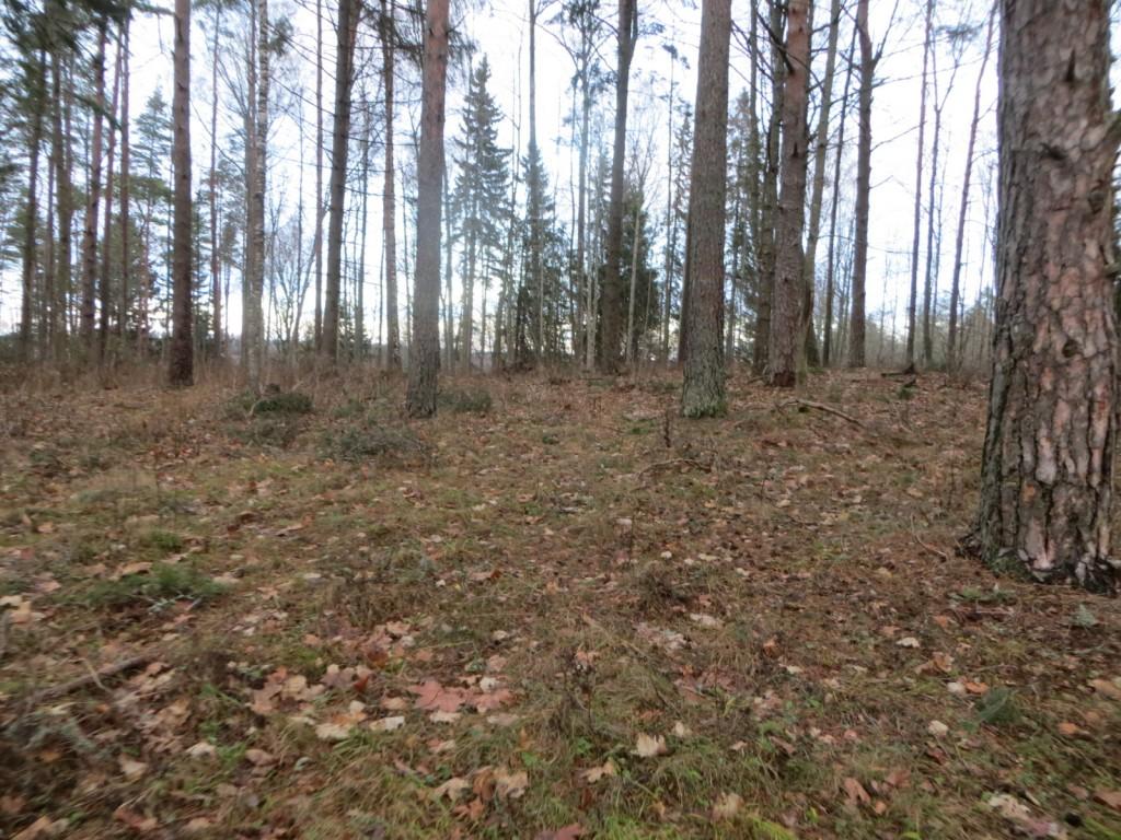 """Linnus """"Aakre kivivare linnamägi"""" reg n 13124, vaade linnuse õue alale. Foto: Ingmar Noorlaid, 28.11.2013."""